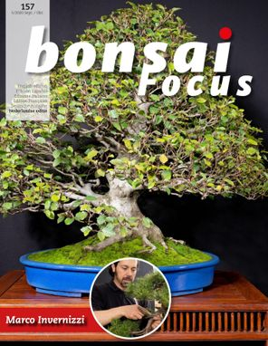 Bonsai Focus NL