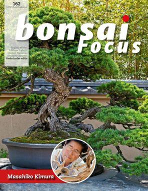 Bonsai Focus NL