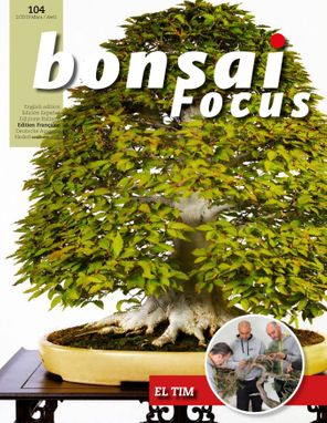 Bonsai Focus FR