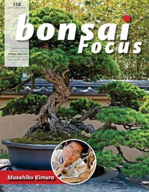 Bonsai Focus FR