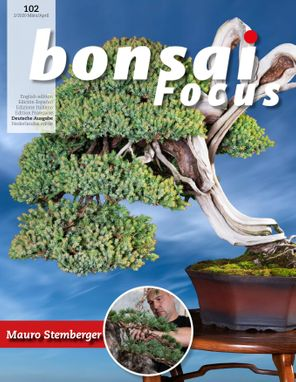 Bonsai Focus DE