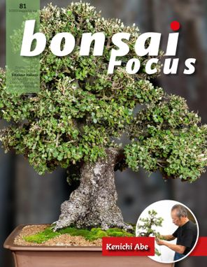 Bonsai Focus  IT
