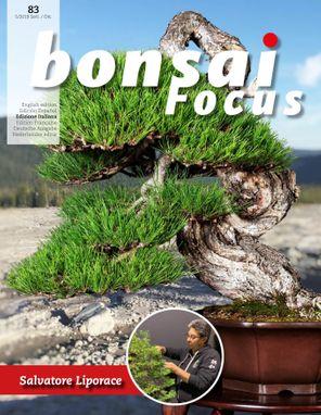 Bonsai Focus  IT
