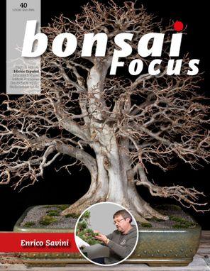 Bonsai Focus ES
