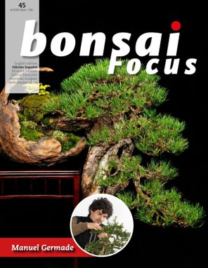 Bonsai Focus ES